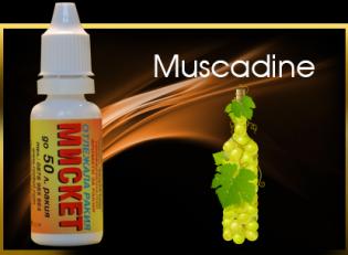 Muscadine